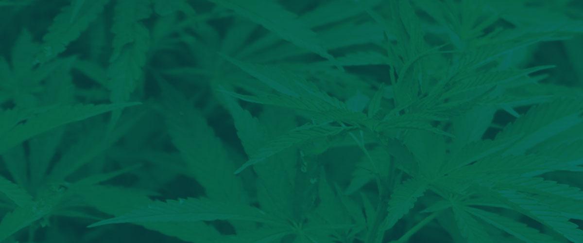 "<span style=""max-width: 900px;"">Marijuana Series</span>"